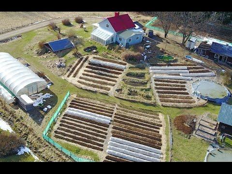 1000 happy chicks, transplanting first no-dig vegetables, electrical upgrades and spring sunshine