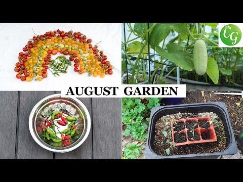 The California Garden In August | Harvests & Garden Preparation Month