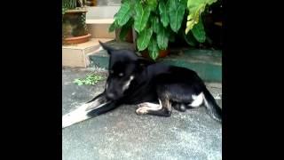 getlinkyoutube.com-เนื้อสั้นหมาผู้น่าสงสาร
