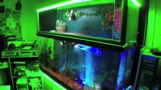 getlinkyoutube.com-Turtle Topper Above 100 Gallon Aquarium