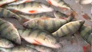 getlinkyoutube.com-Зимняя рыбалка в Астрахани