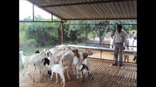 getlinkyoutube.com-BROILER SHEEP AND GOAT SHED INDIA