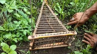 getlinkyoutube.com-Cara membuat perangkap burung dari batang pohon patat