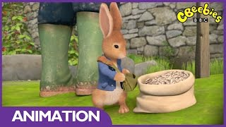 getlinkyoutube.com-CBeebies: Peter Rabbit And The Sunflower Seeds