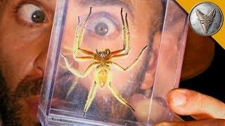 DANGEROUS Jungle Spider! width=