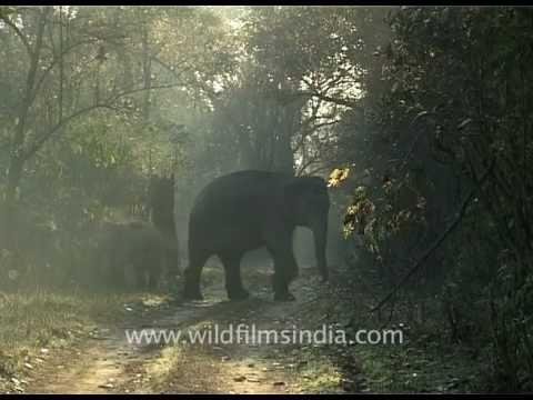 Baby elephant walk!