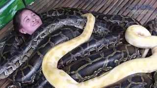 Adrenaline Junkies Have Snake Massage