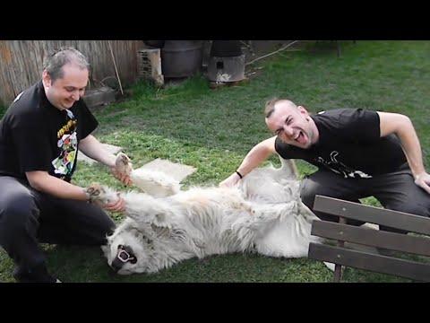 brkovi-nevjernica-pizda-materina-2014-official-video-brkovifolk