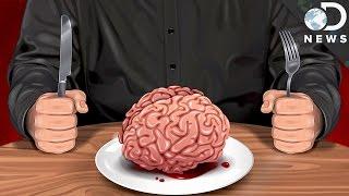 Is Cannibalism A Natural Human Behavior?