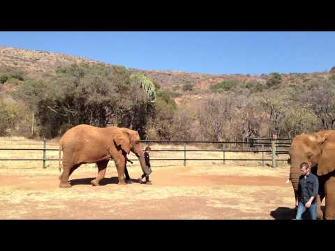 The Elephant Sanctuary – Walking with an Elephant