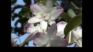 Orquídeas sobre árvores - Cuidando da Natureza - Biodiversidade - Preservação do meio ambiente