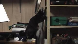 CRAZY CURIOUS CAT!.wmv