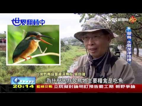 大坑新年數鳥報導 20190210 - YouTube