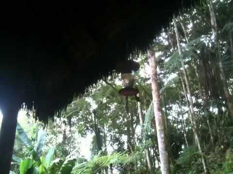 Ecuador a birdwartchers' paradise -www.visitecuadorandsouthamerica.com