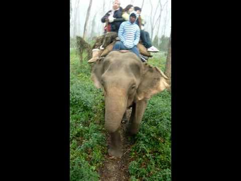 Chitwan-象鼻很忙