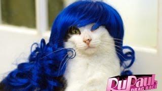RuPaul's Cat Race