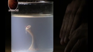 Man creates Monster in his basement with Sperm and Chicken Egg - Home Alchemy! width=