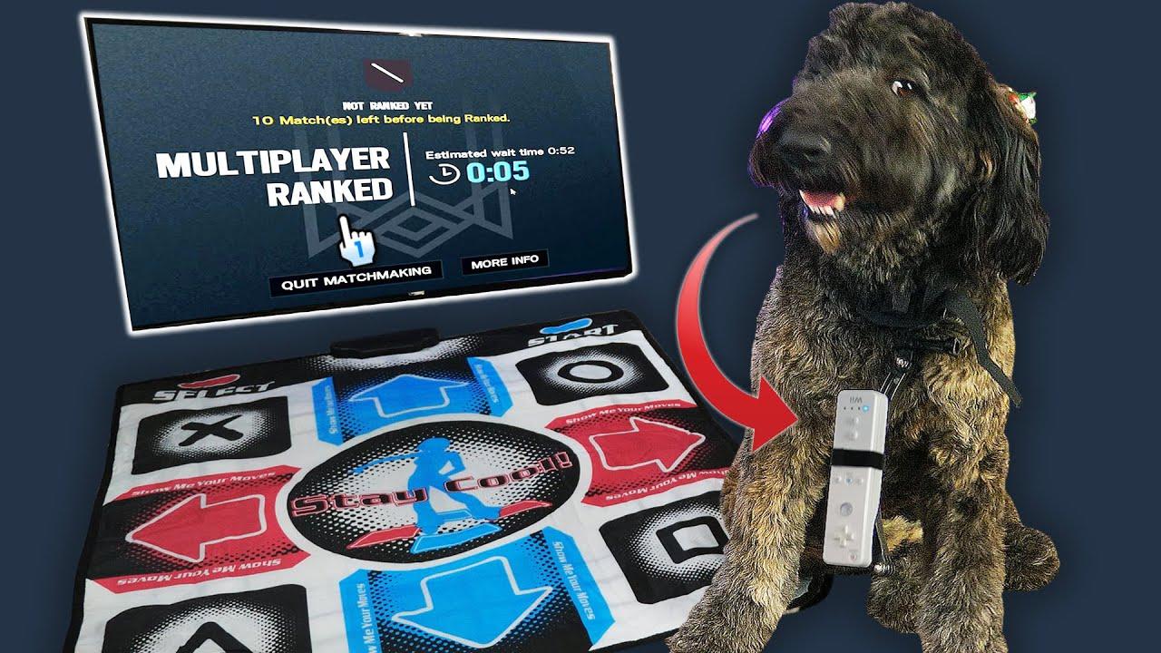 Basically Homeless - I Taught My Dog to Play RANKED Rainbow Six Siege