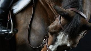 Paradise || Equestrian Music Video