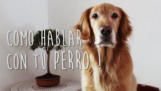 El perro que habla - Sebastian Silva