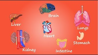 Função e importância dos Órgãos do corpo humano - VÍDEO EDUCATIVO