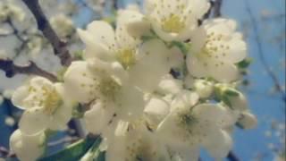 Floriile de Vasile Alecsandri - Recita Florin Nan