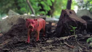 In The Jungel | Stop Motion | Saiful islam