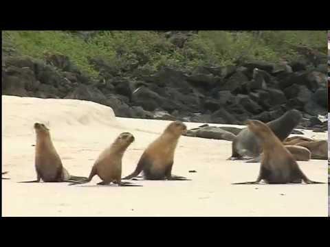 Gardner Bay – Ecuador Galapagos Island Cruises by Kleintours SP