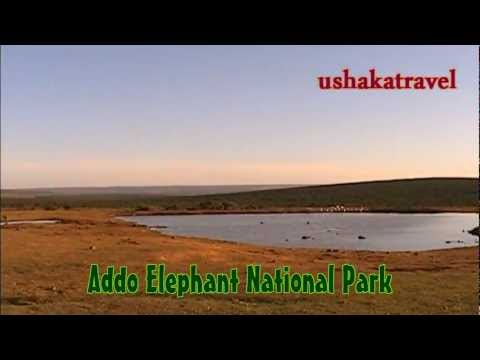 South Africa/Addo Elephant National Park.Pumbaa