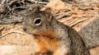 habitat Instructional video.wmv