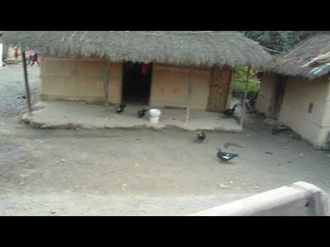 Chitwan-禽類很自由
