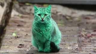 Feline a little green! Meet the GREEN cat of Bulgaria
