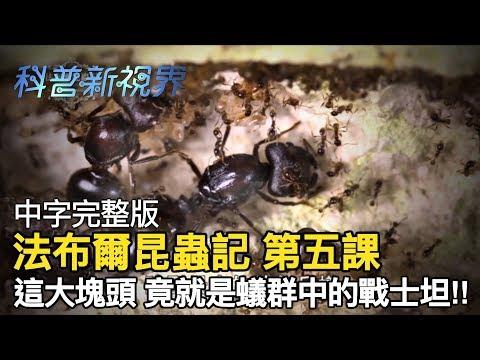 激昂的生命   身體比同伴大近500倍的兵蟻,在掠食時往往擔任最後致命攻擊的角色!!【法布爾昆蟲記 第五課】全片線上看 - YouTube