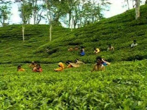 Sylhet Srimongol Tea Garden