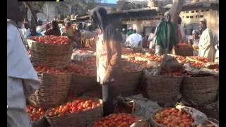 Dangote Tomato factory