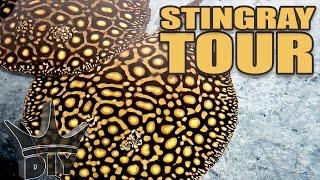 INSANE stingray aquarium tour!!!