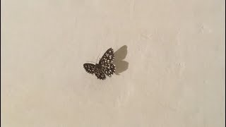 Tunay Na Pag-ibig by Eurika [Official Music Video]