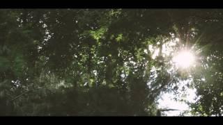 Free Video Loops - Sunny Forrest Loop