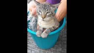 Gato dice Raul