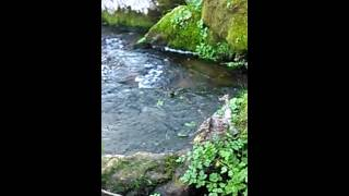 Brook water sound relaxing