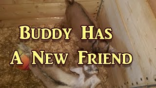 Buddy Gets A Friend!