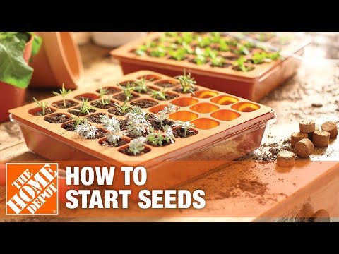 How to Start Seeds at Home with a Gardening Starter Kit
