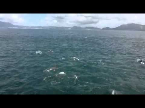 700 dolphins