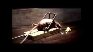 topo che fà ginnastica con trappola per topi