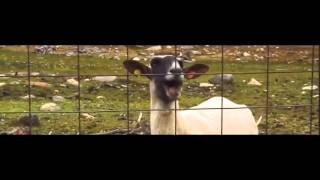 Taylor Swift - Trouble (Goat Remix)