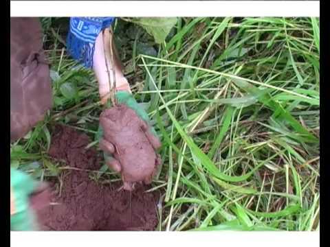 DOCUMENTAIRE AFRIQUE AFRICA ECOLOGIE : Les Amis de la Terre Togo  (Part 1)  (www.videaste.eu)