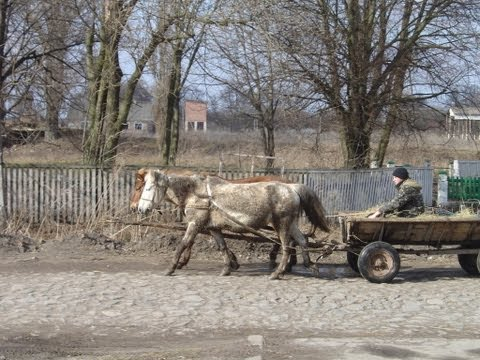 Bruce McDonald – Out of gas in Ukraine