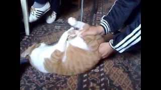 Crazy Wild Cat