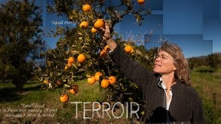 Terroir | The Lexicon of Sustainability | PBS Food