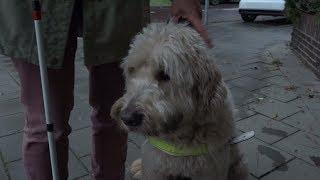 Blinde Toos durft niet met hond door 'knaltunnel'